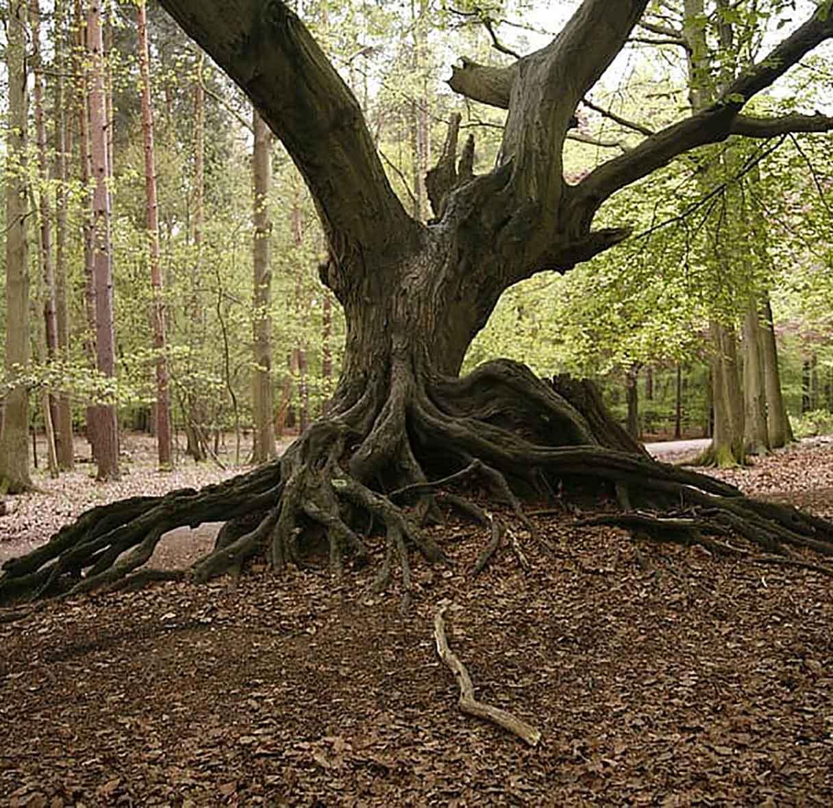 Dead Wood Tree Surgeon