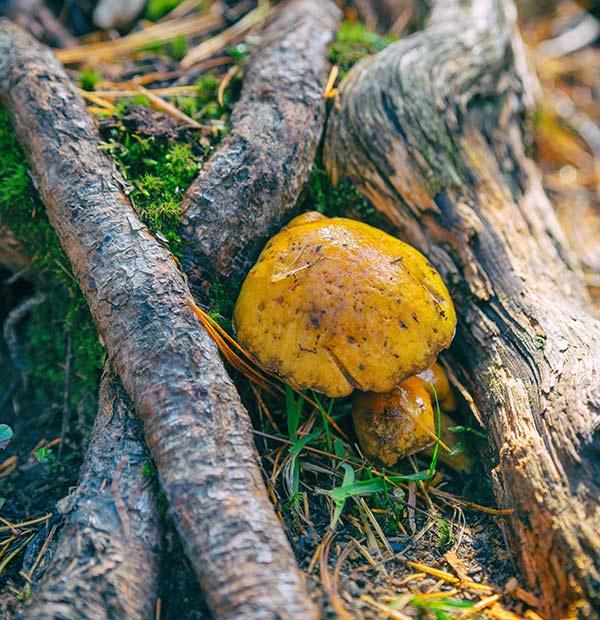 Fungus on Tree Root
