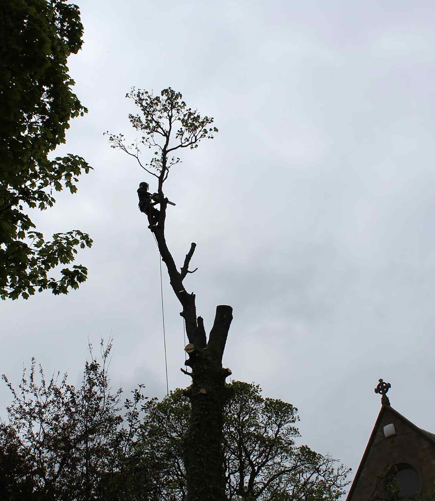 Tree Pruning East Lothian-Edinburgh