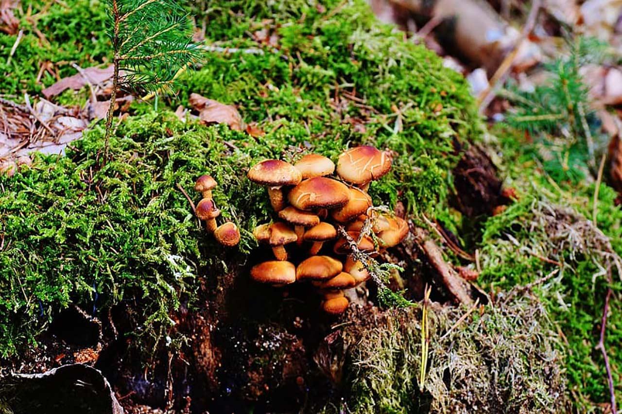 Mushroom Tree Stump Fungus Tree Surgery Felling Tree