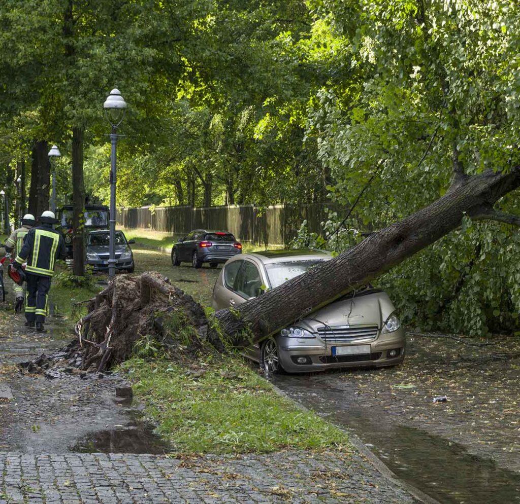 Storm Damage Tree Edinburgh