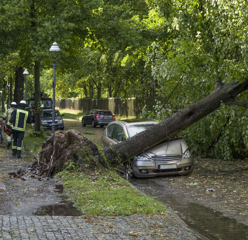 Storm Damage Tree Dunbar