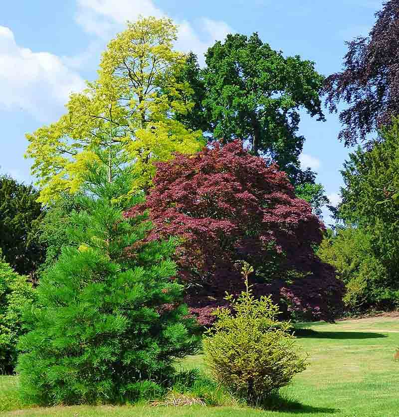 Tree Pruning in Dunbar