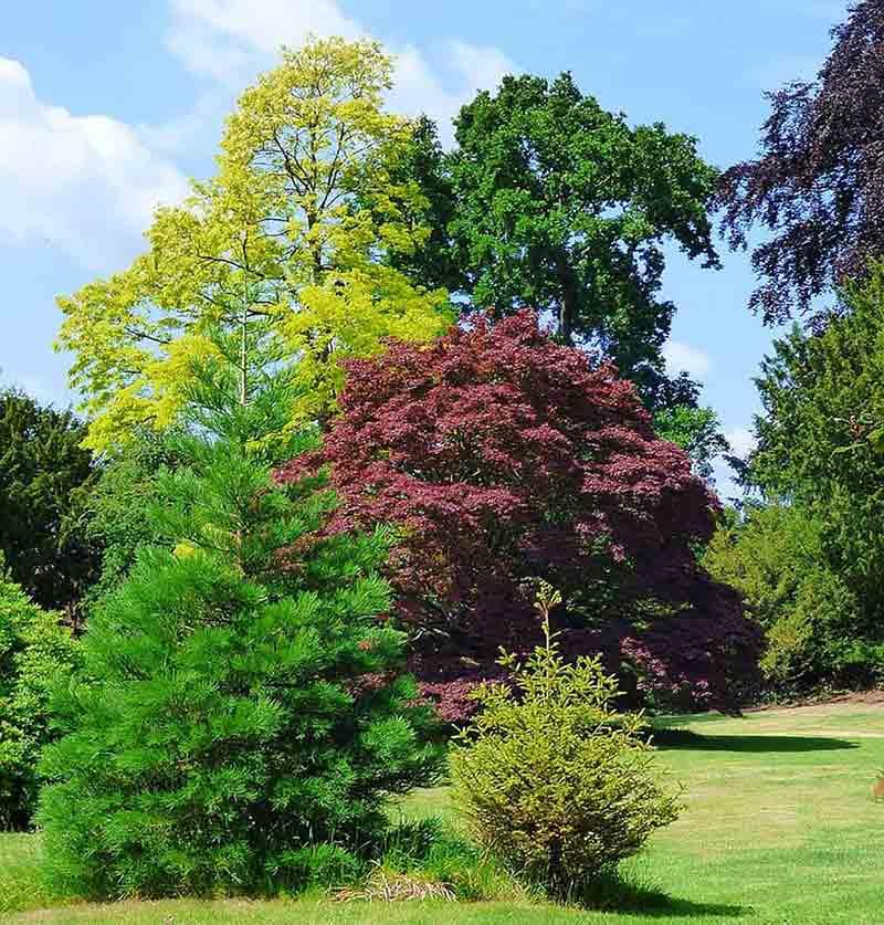 Tree Pruning in Musselburgh