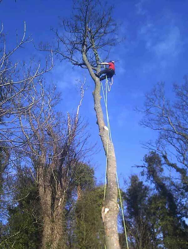 Tree Surgeon in North Berwick - Ali Wales