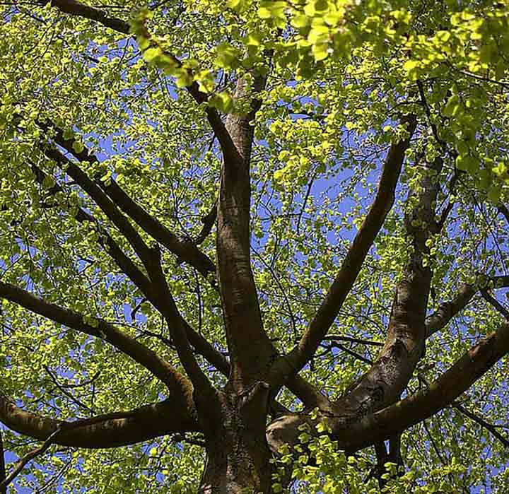 Tree Solutions in North Berwick, East Lothian